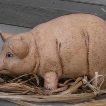 varken groot staand