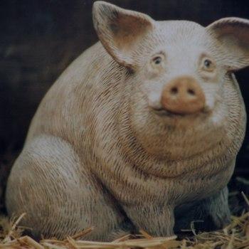 varken groot zit