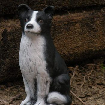 hond border collie
