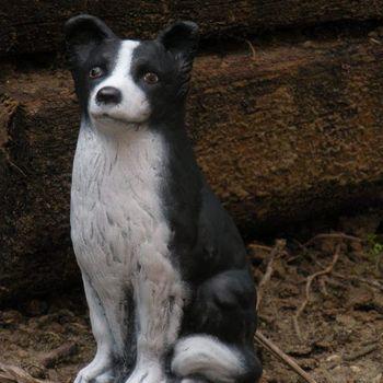 hond border collie