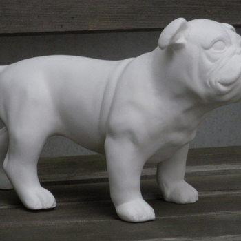 hond buldog staand