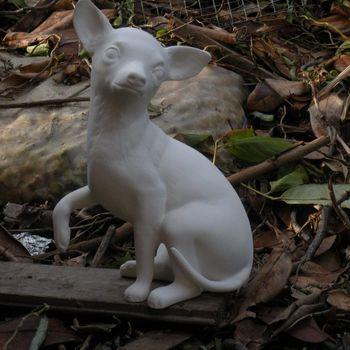 hond chihuahua