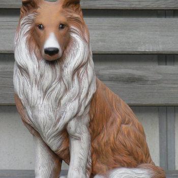 hond collie groot