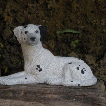 hond dalmatiër klein