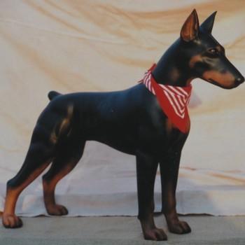 hond doberman groot staand