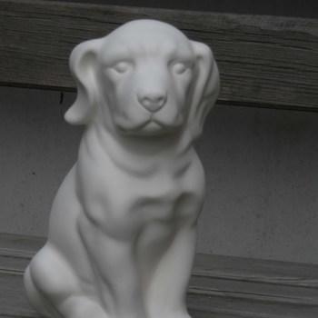 hond labrador