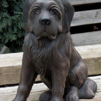 hond newfoundlander
