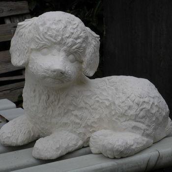 hond poedel groot