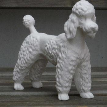 hond poedel staand