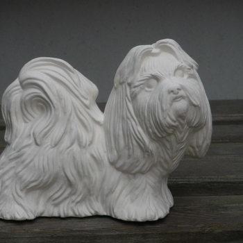 hond shitzu