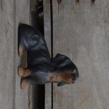 hond teckel klein langharig