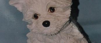hond yorkshire