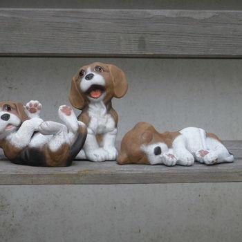 hond puppies klein