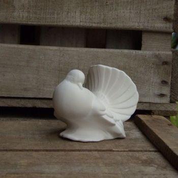 duif klein (sierduif)