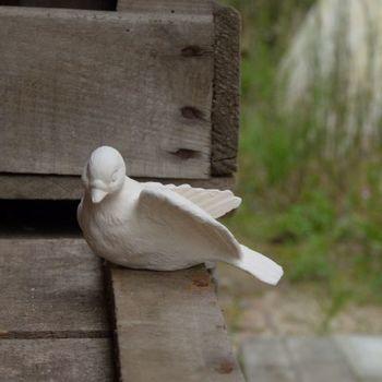 duif klein hoofd gedraaid