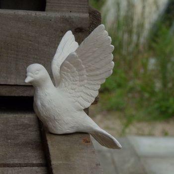 duif klein vleugels open