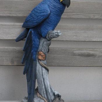 papegaai groot (ara) op boomstronk