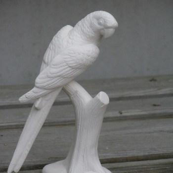 papegaai klein op boomstam